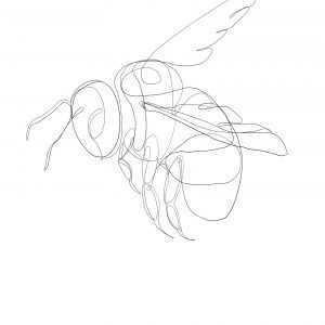 Pszczoła szkic