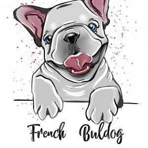 French Buldog